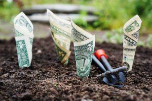 growing money_money_garden
